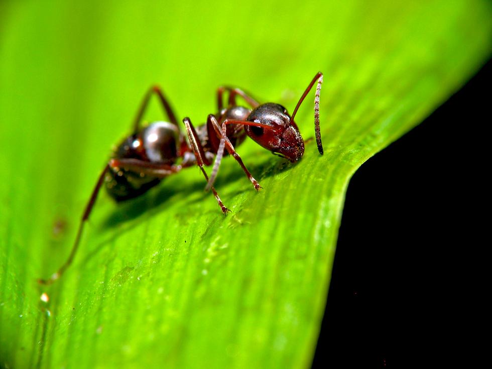 совершенствуются, картинка мурашка фото схеме