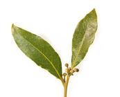 Bay Leaf In Telugu English Telugu Dictionary Glosbe