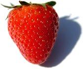 frutilla, fresa